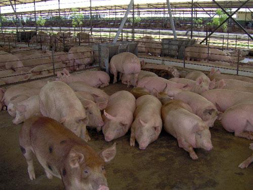 Comprar Agrícola los animales