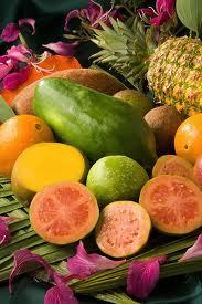 Comprar Concentrado de Frutas