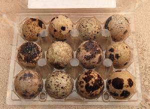 Comprar Huevo de Codorniz Alimenticios