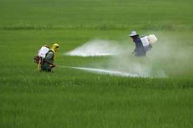 Comprar Pesticida