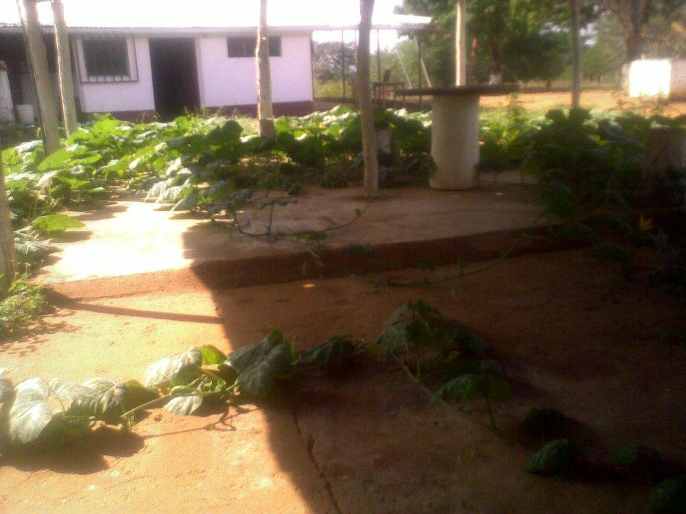 Comprar Produccion agricola de mango, melon, parchita, lechoza, pimenton, aji,principalmente.