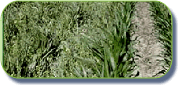 Comprar Herbicidas