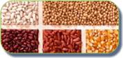 Comprar Semillas de maiz