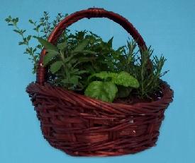 Comprar Cesta de Plantas Aromatocas y Medicinales
