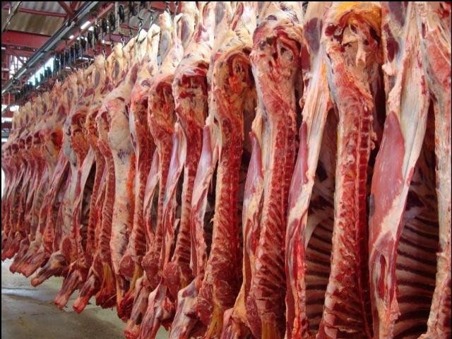 Comprar Carne en canal