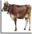 Comprar Alimento para el ganado, Ganarina 1A y 1B Especial