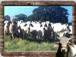 Comprar Animales de granja