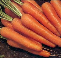 Comprar Semillas Zanahoria