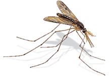 Medios de control con insectos