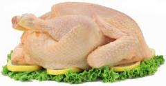 Pollo  de Broiler