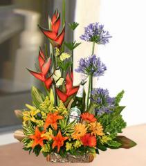 Flores naturales, Exotico