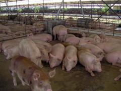Agrícola los animales