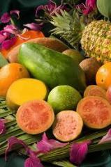 Concentrado de Frutas