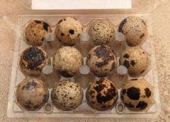 Huevo  de Codorniz Alimenticios