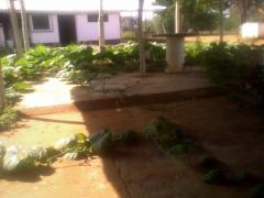 Produccion agricola de mango, melon, parchita,