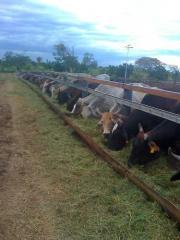 Ganado bovino de ceba