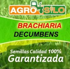 Semilla De Pasto Decumbens ( Bolsa De 5 Kg)