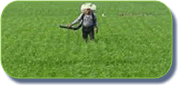 Fertilizantes