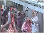 Huesos y restos de carne