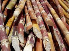 Productos de la agricultura, fibra