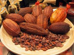 Productos agrícolas granos de cacao, Sur del Lago