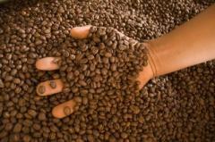 Café en grano para Cafetin San Antonio