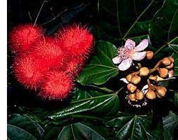 Colorantes de alimentos naturales, Bixina y