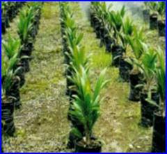 Fertilizantes minerales, complejos