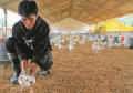 Insumos para la avicultura