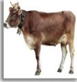 Alimento para el ganado, Ganarina 1A y 1B Especial
