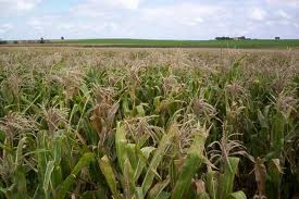 Coop. Agroservicios la Cima, S.L., Portachuelo