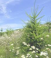Pedido Reforestación