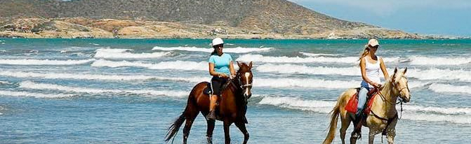 Pedido Excursión Paseo a caballo