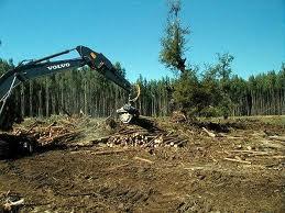 Pedido Servicios forestales
