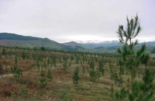 Pedido Mejoramiento forestal del campo