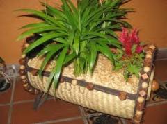 Decoración de Locales con las Flores Vivas