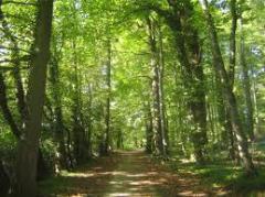 Planificación de Medidas de Protección de Medio Ambiente
