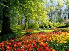 Diseño de Paisaje de Jardin