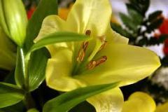 Servicios Florísticos de Fiestas