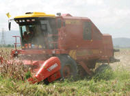 Seguro en Agricultura