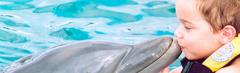 Excursión Nado con Delfines