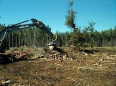 Servicios forestales