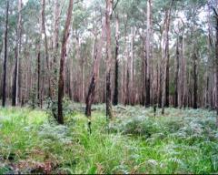 Mejoramiento forestal